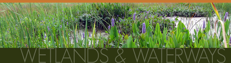 Wetlands & Waterways